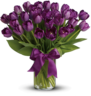 Passionate Purple Tulips